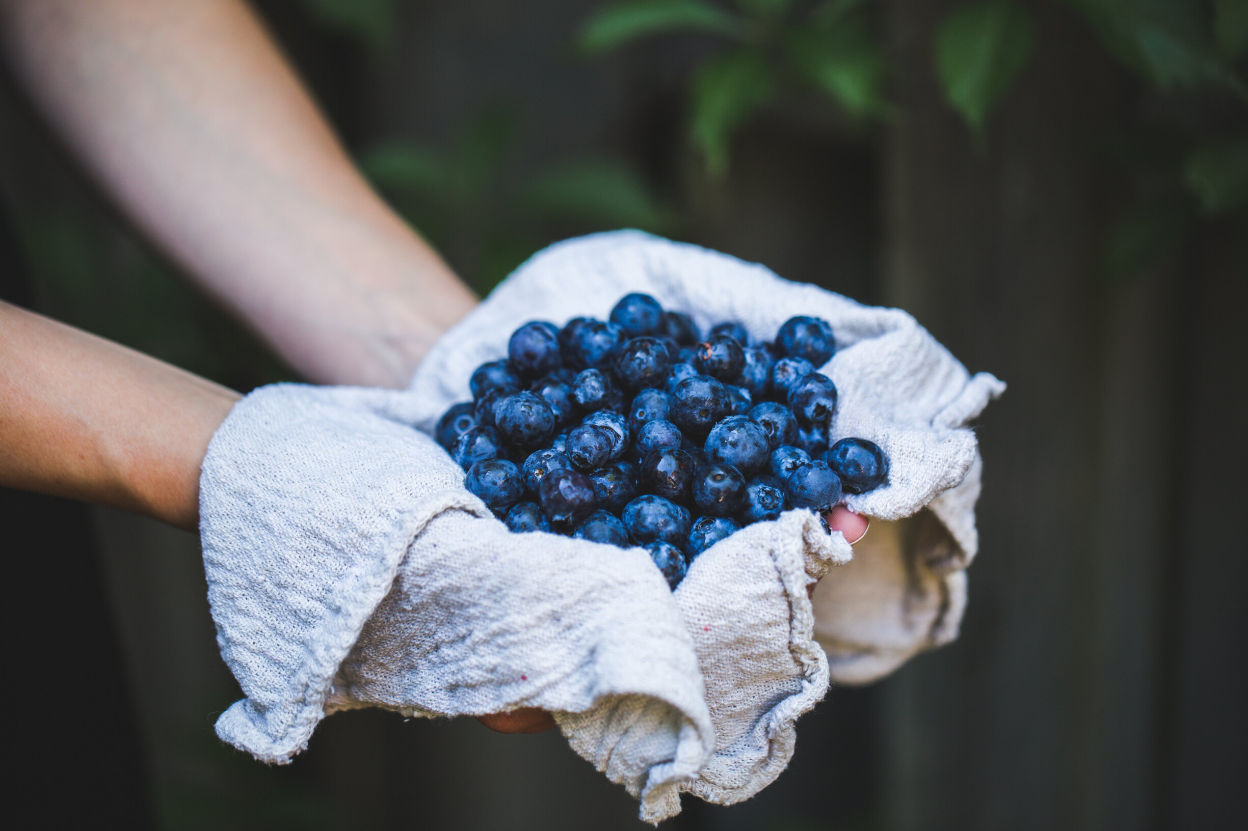 mirtilos-tudo-o-que-tens-de-saber-sobre-frutos-vermelhos-frutos-antioxidantes