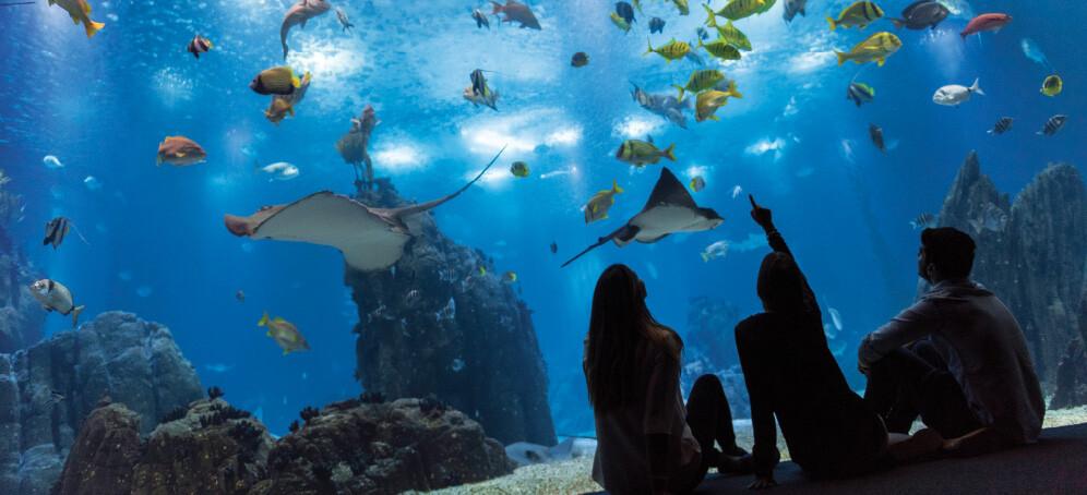 oceanário-de-lisboa-o-que-fazer-com-chuva-em-lisboa