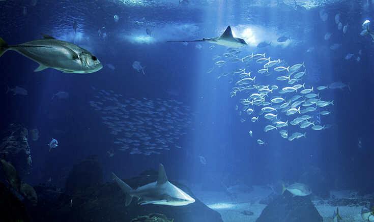 oceanário-de-lisboa-guia-para-visitar-lisboa-em-3-dias