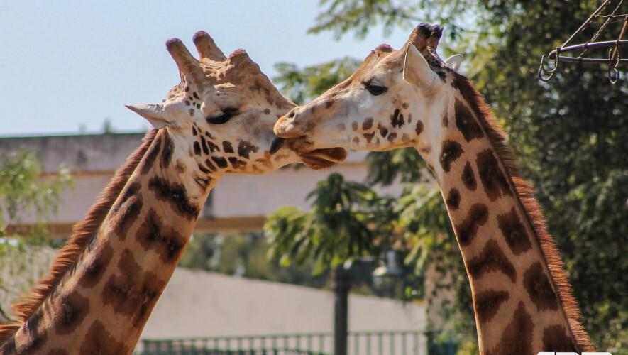 Jardim-Zoológico-de-lisboa-guia-para-visitar-lisboa