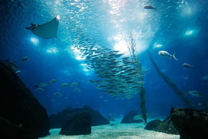 oceanário-de-lisboa-guia-para-visitar-lisboa