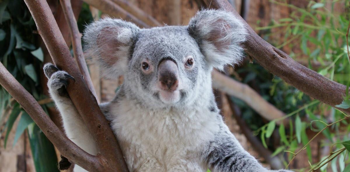 jardim-zoológico-de-lisboa-guia-para-visitar-lisboa-em-3-dias