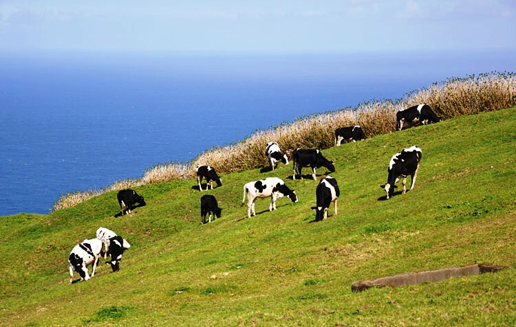 campos-de-pastagem-dos-açores-guia-de-viagem-pontos-de-interesse-turístico-Açores